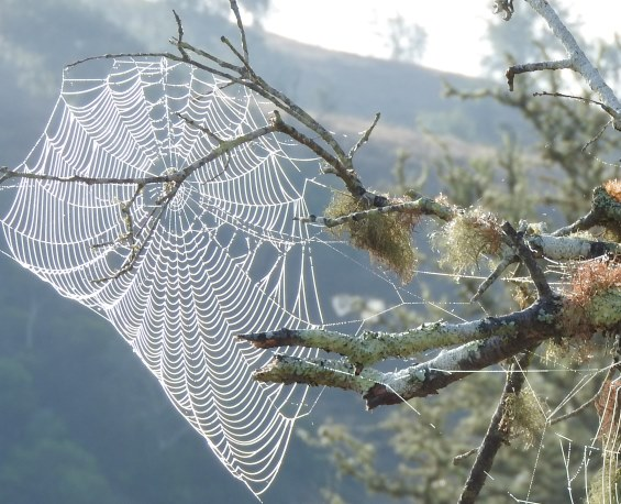 Spinneweb Monted do Casarao